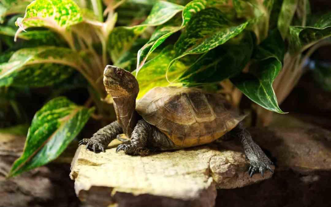 Tipps für das passende Schildkrötengehege