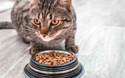 Hochwertiges Trockenfutter für Katzen