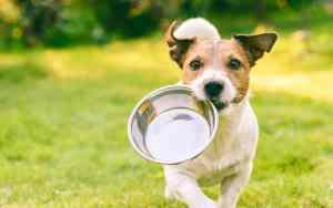 Die richtige Ernährung für deinen Hund