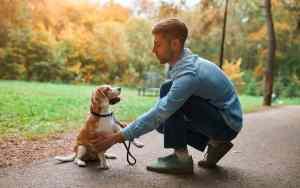 Was genau machen Hundeflüsterer?