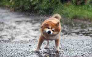 Das Gute am Spaziergang im Regen