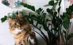 So wird deine Wohnung katzensicher