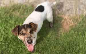 Faktencheck: Ist Gülle für Hunde giftig?