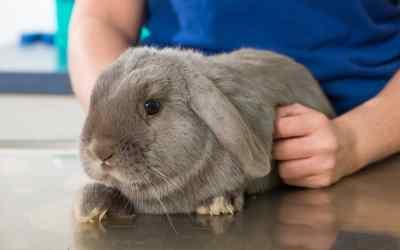 Wenn das Kaninchen Durchfall hat