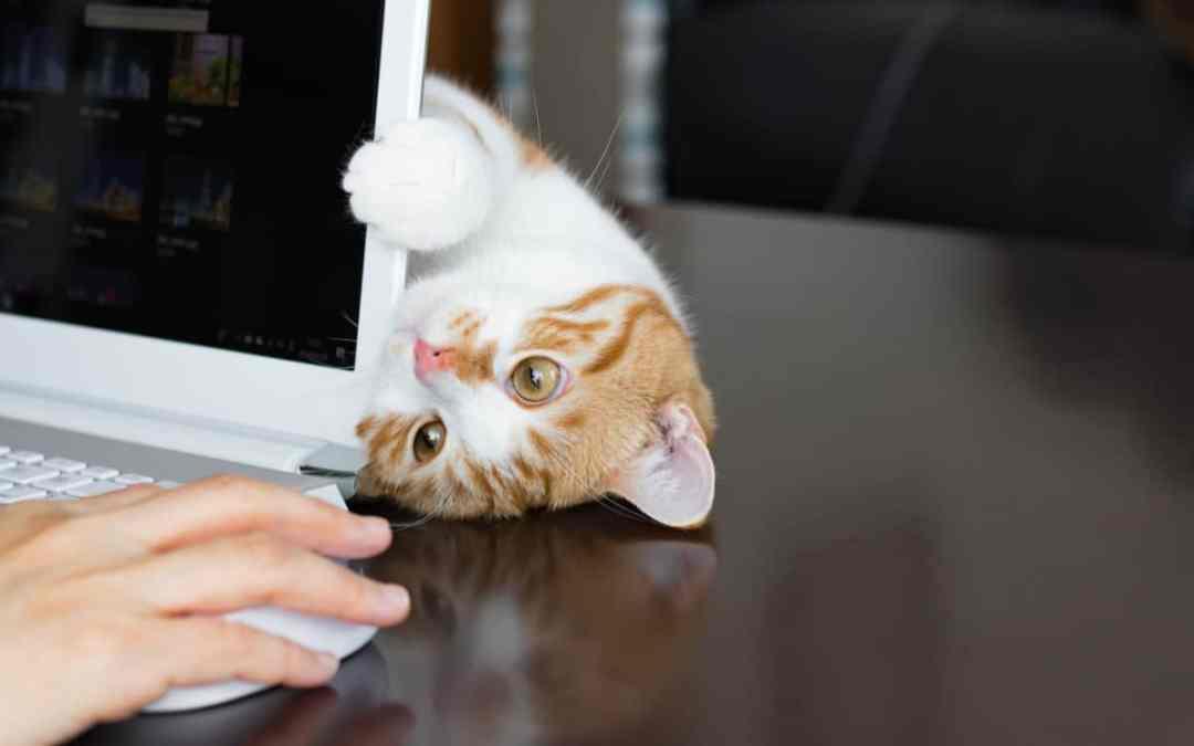 Tipps: So gelingt Homeoffice mit Katze