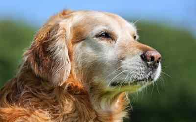 Was braucht ein alter Hund?