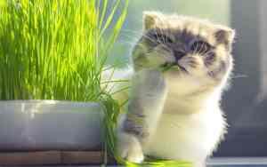 Wozu brauchen Katzen Katzengras?