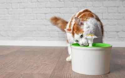 Sind Trinkbrunnen für Katzen sinnvoll?