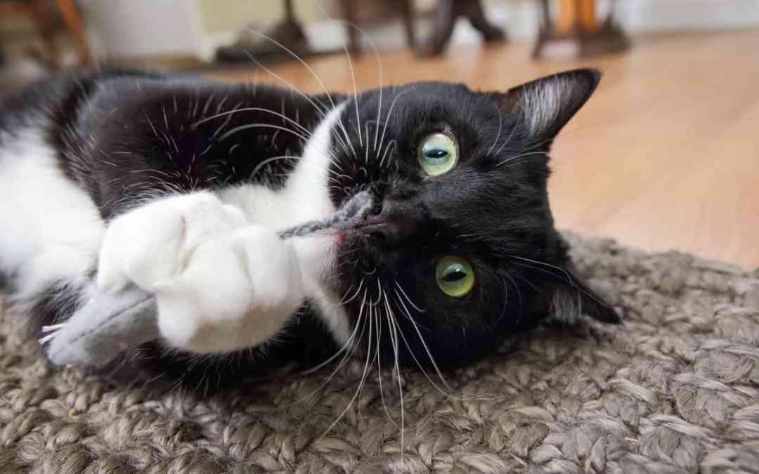 Warum Katzen auf Katzenminze stehen