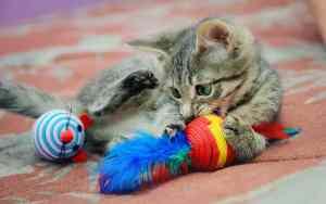 Was ist gefährliches Katzenspielzeug?