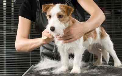 Hundefell: Scheren oder nicht?