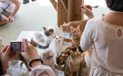 Was ist ein Katzencafé?
