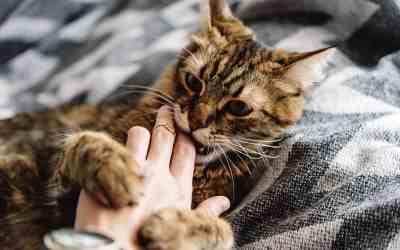 Katze das Beißen abgewöhnen – Tipps und Tricks