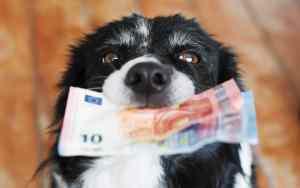 Höhe der Tierarztkosten für den Hund