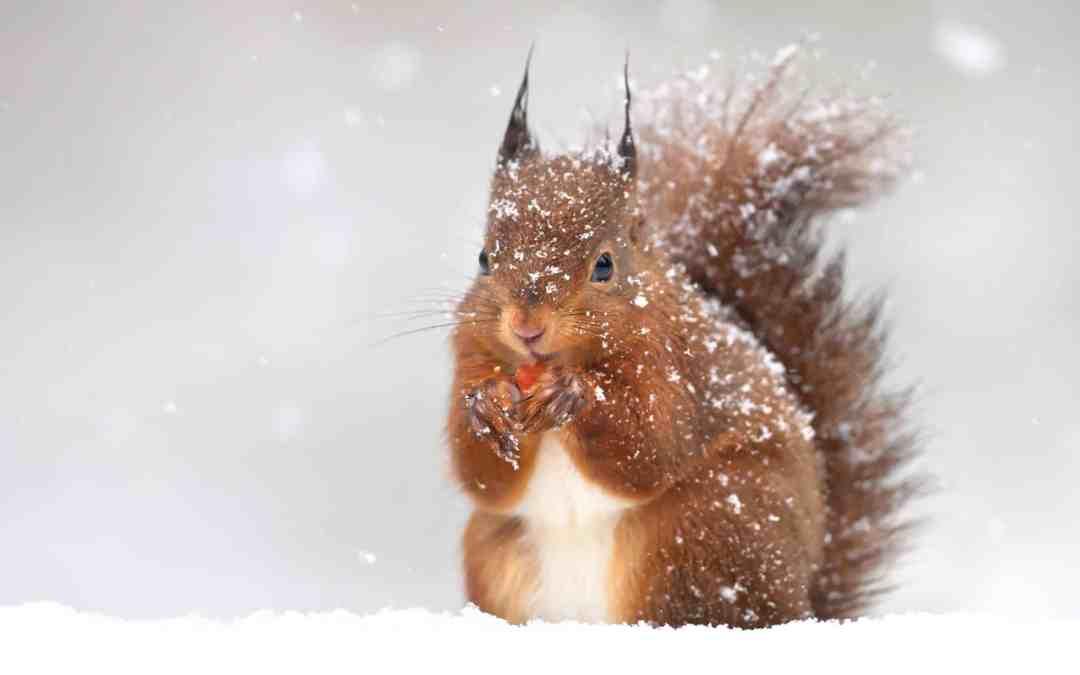 Welche Tiere halten Winterschlaf?