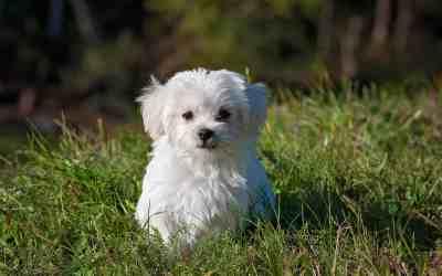 Hunde, die nicht haaren – gibt's das? Eine Übersicht
