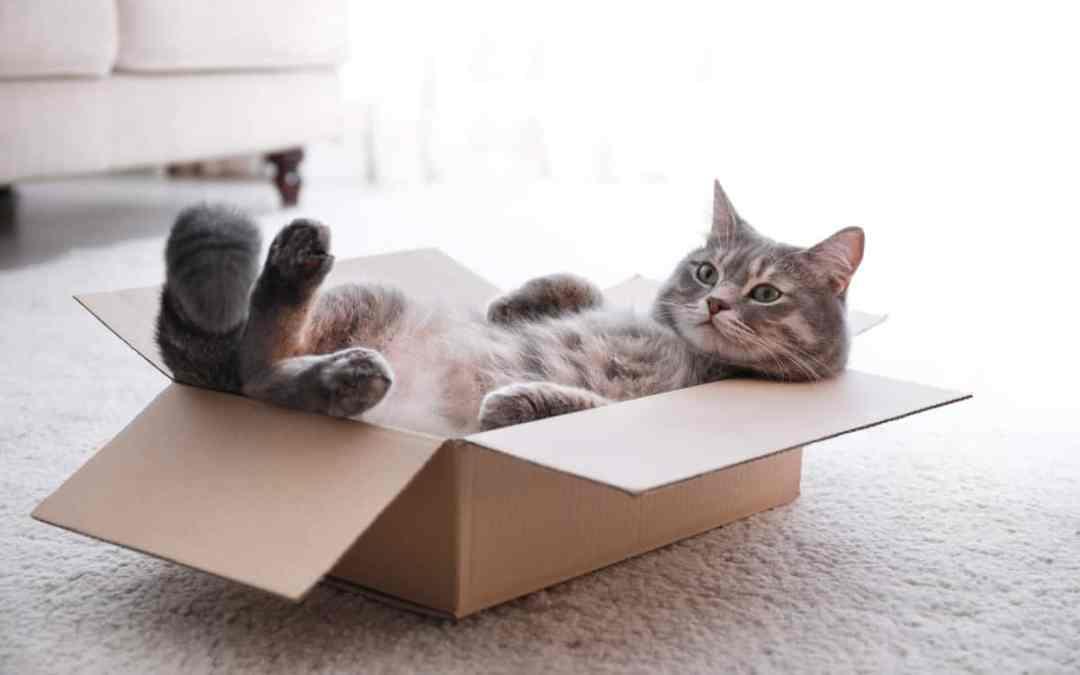 So machst du deine Katze glücklich