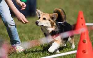 Degility – das neue sanfte Hundetraining