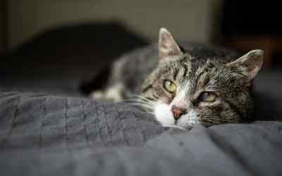 Wenn Katzen sterben – Begleitung auf dem letzten Weg