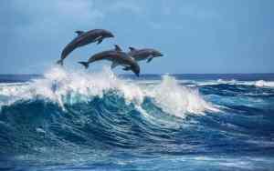 Über die Faszination von Delfinen