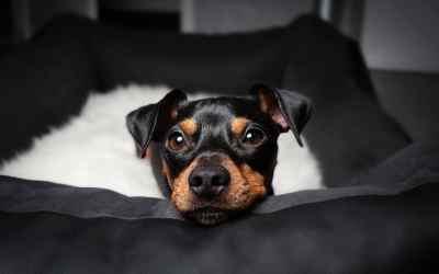 Was ist der beste Schlafplatz für den Hund?