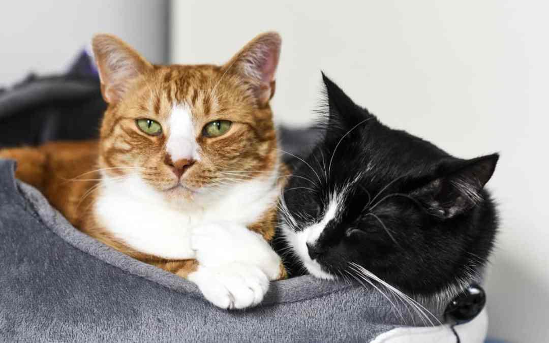 Katze oder Kater - wer ist verträglicher?