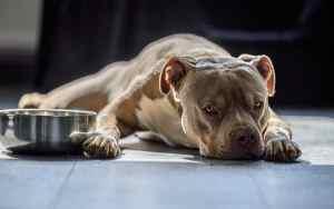 Hund frisst nicht – woran es liegen kann