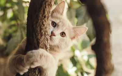 Katzenpension: Urlaub für die Katze