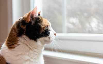 Können Katzen Depressionen bekommen?