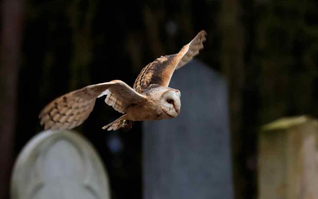 Tierfriedhof: Letzte Ruhe für dein Haustier