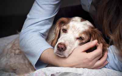 Hund einschläfern: Hilfe für den letzten Weg