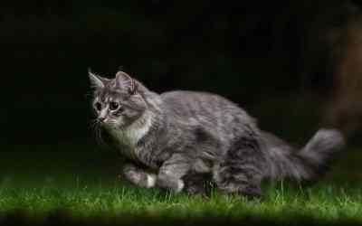 Nächtlicher Katzenjammer – was hat es damit auf sich?