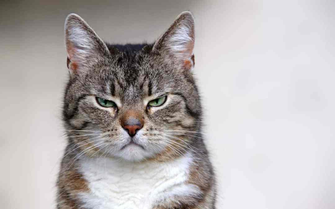 6 Tipps, wenn deine Katze mäkelt