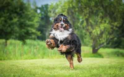 Wie sinnvoll sind Nahrungsergänzungsmittel für Hunde?