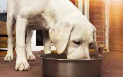 Was taugt Hundefutter aus Insekten?