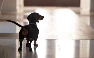 Welche Aufgaben hat ein Schulhund?