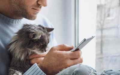 Weniger Stress: Mobiler Tierarzt statt Praxisbesuch
