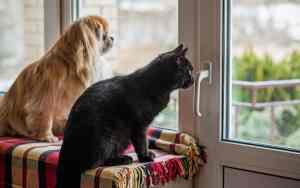 Tierheime schlagen Alarm: Tiere kommen zum Corona-Ende zurück