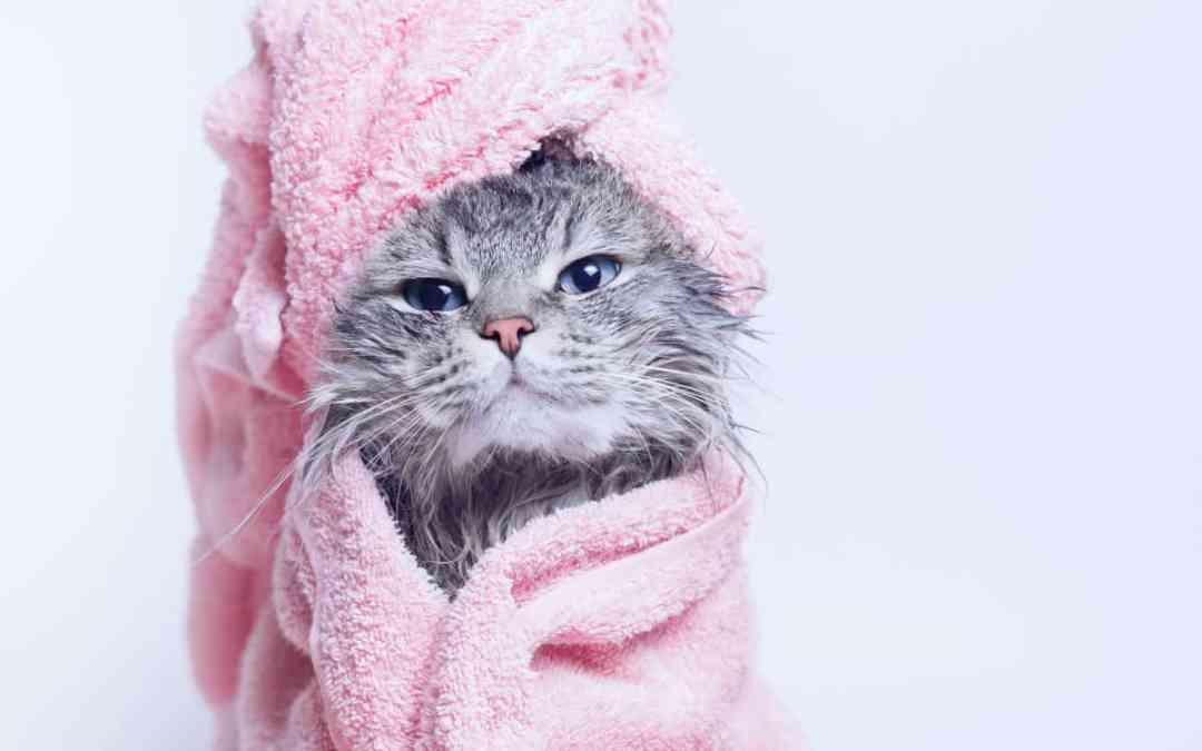 Darfst du deine Katze baden?