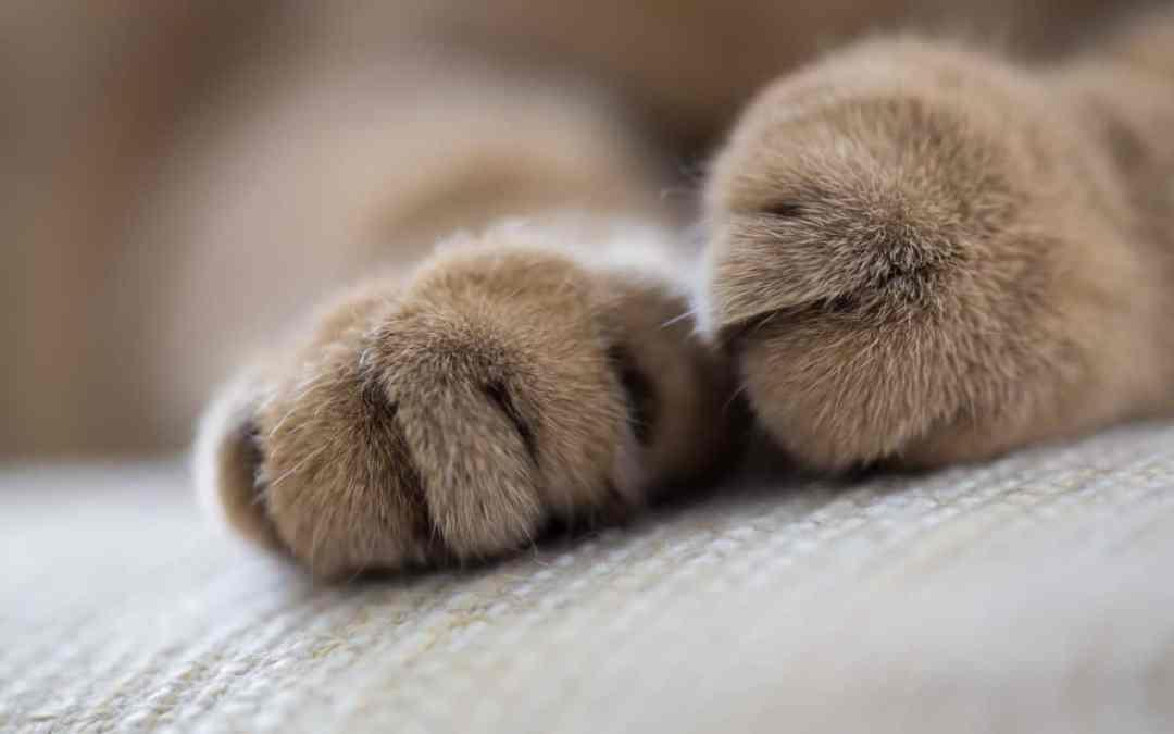 Katzenpfoten: Wahre Wunder der Natur