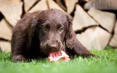 Hundeernährung: Was ist Preyen?