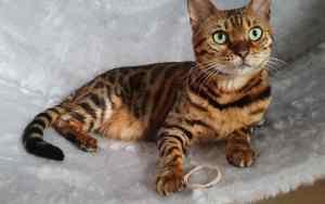 Das Katzenlaufrad: sinnvoll oder nicht?
