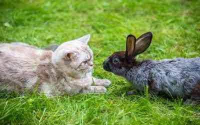 Passen Kaninchen und andere Haustiere zusammen?