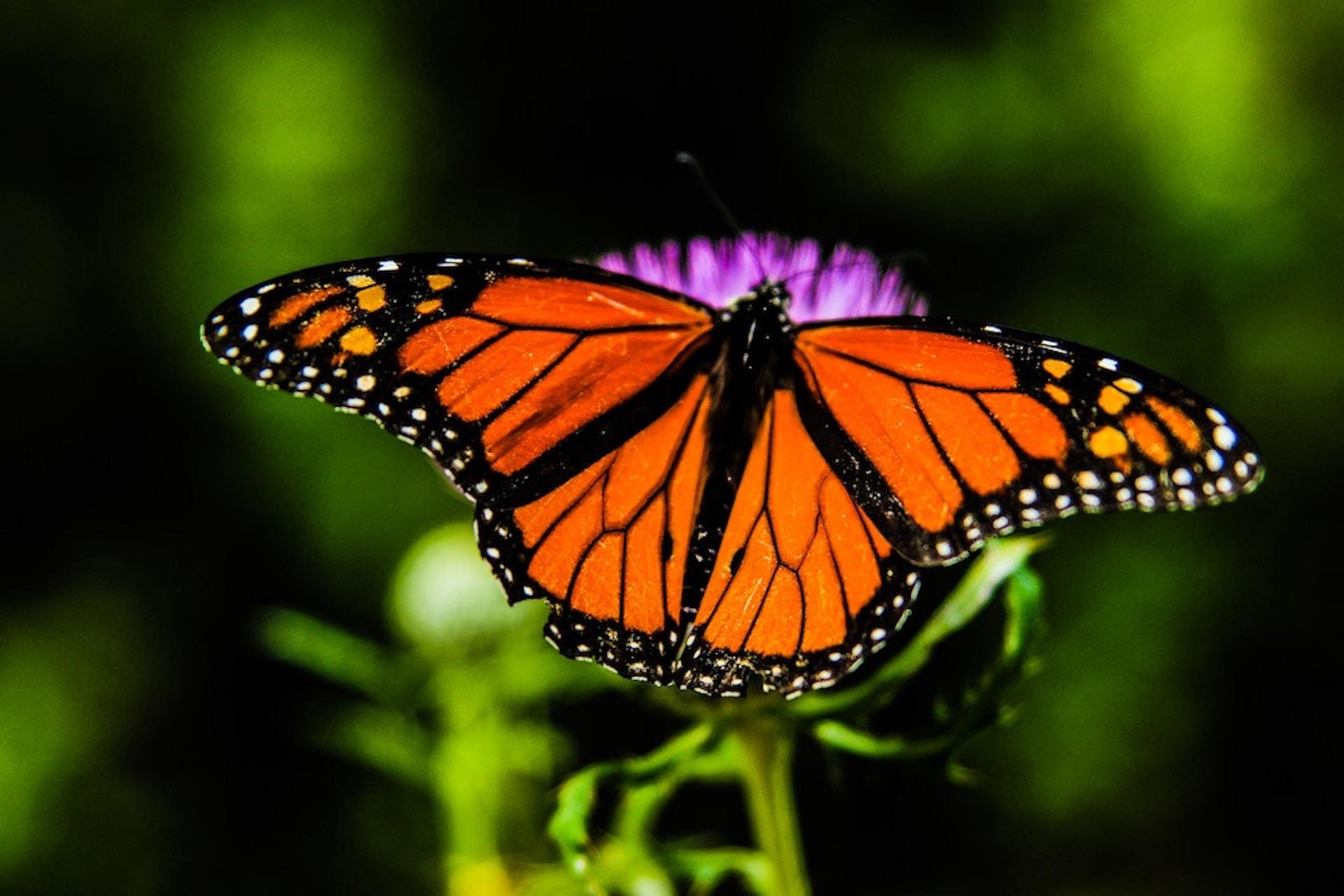 Schilddrüsenunterfunktion – Wenn der Schmetterling im Hals nicht mehr fliegt