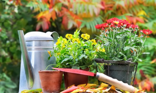 Избор на стайни растения според темперамента