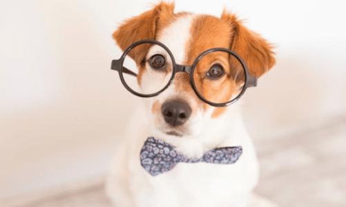 Най-умните породи кучета в света – част 2