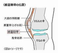 「膝の皿」の画像検索結果