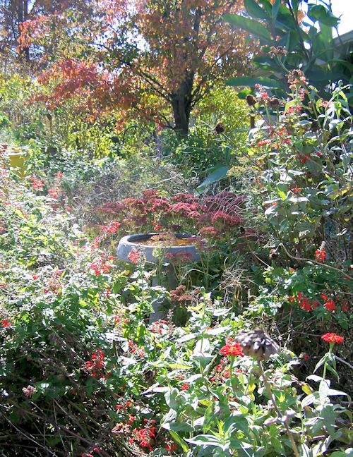 Wild Garden - October, 2009