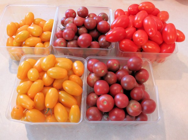 Small fruited tomatoes for drying