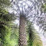 giant tree fern